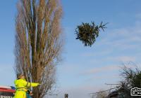 Fliegende Christbäume - drei Starke Männer reichen aus um Lülsfelds Christbäume einzusammeln