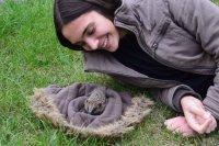 Igel und Katzen