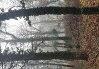Nachhaltigkeit Wald