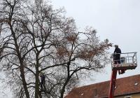 Feuerwehr unterstützte die Schneidarbeiten